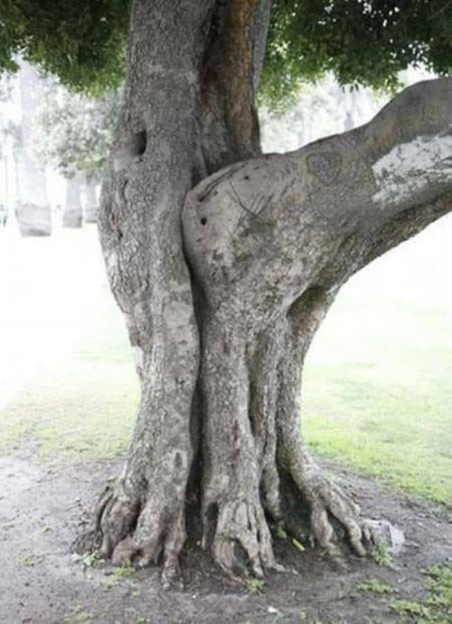 Do You Know How Trees are Made?