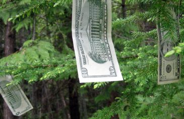 Money grows off of evergreen trees as though they are money trees.