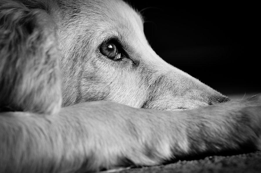 Dating Deal Breaker: Animal Abuse