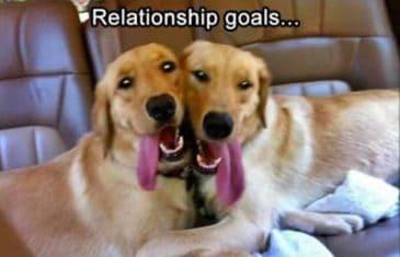 funny-dog-memes-relationship-goals