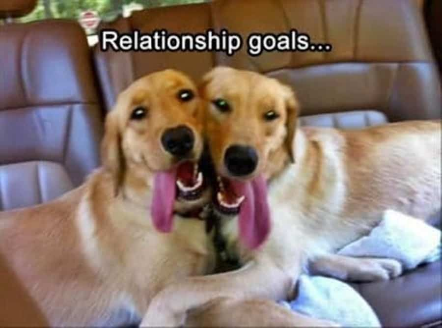 20 Relationship Memes That Will Give You All The Feels If You're In Love