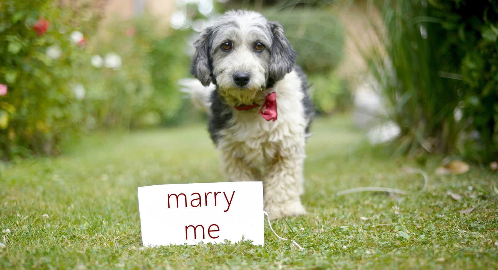 marriage proposal with pets dog