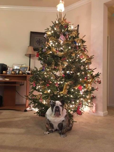 moe-christmas